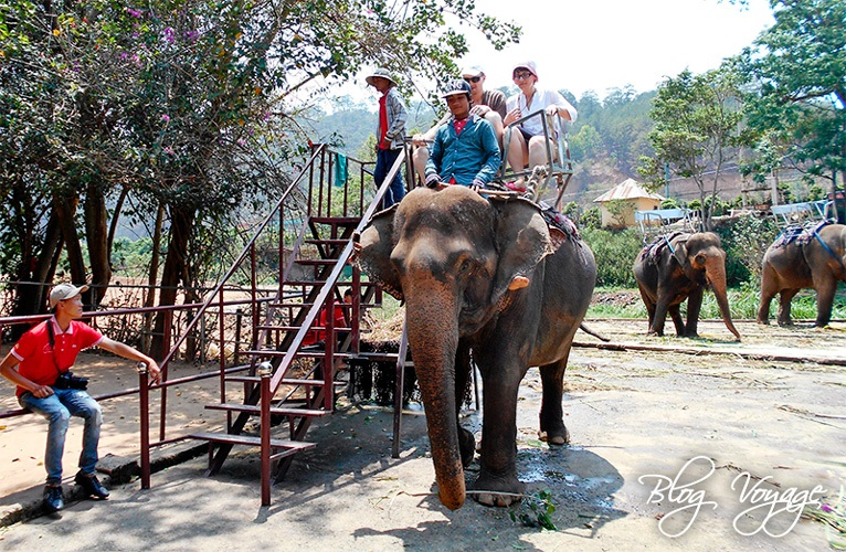 Катание на слонах в зоопарке Датала во Вьетнаме