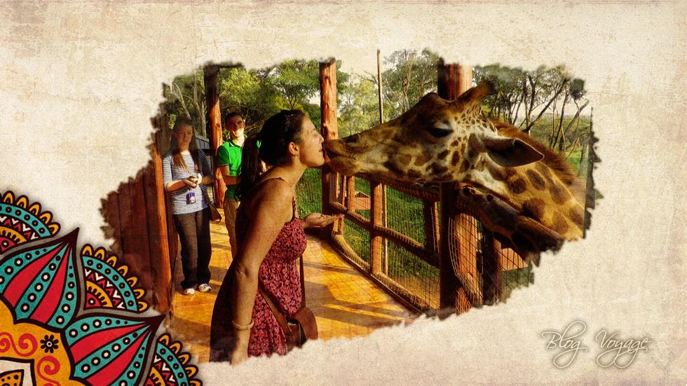Что посмотреть в питомнике Лангатта в Найроби