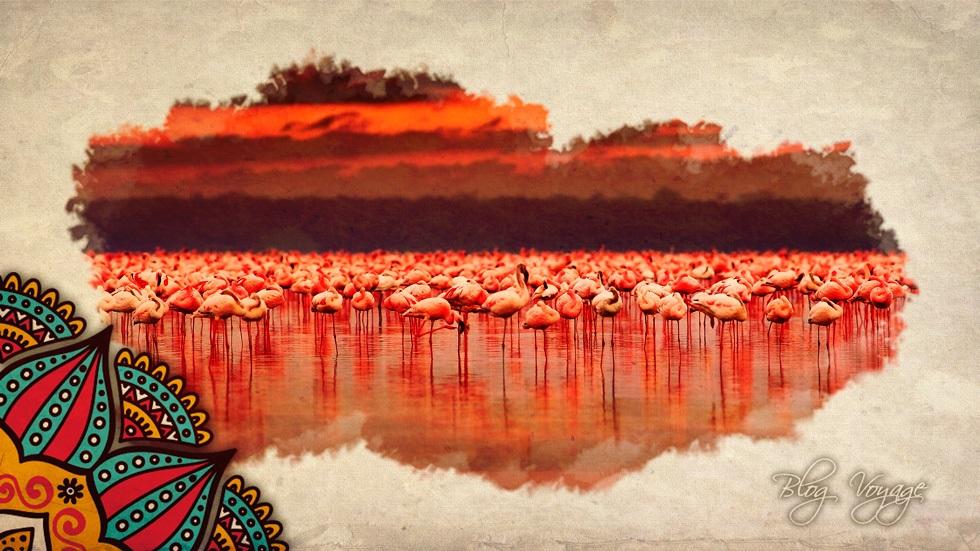 Розовый фламинго в Кении