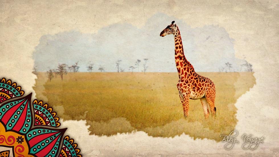 Самостоятельный отдых в Кении