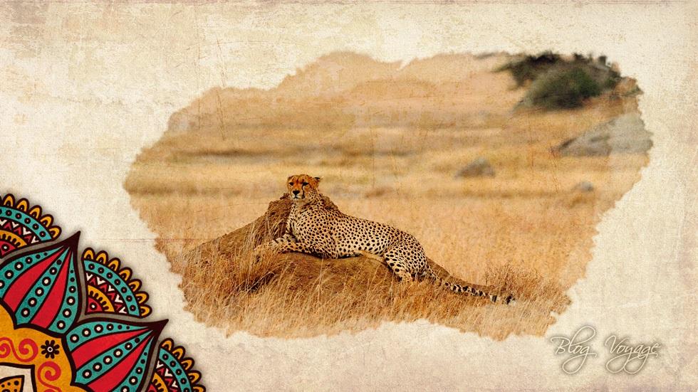 Тур в Кению - посетить сафари